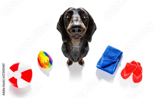 Foto op Aluminium Crazy dog summer vacation holiday dog
