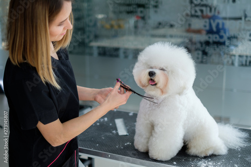 Fotografering Bichon Fries at a dog grooming salon
