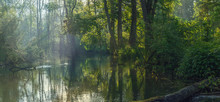 Beautiful Small Lake Scenery Made By A Beaver In A Forest At Sunrise