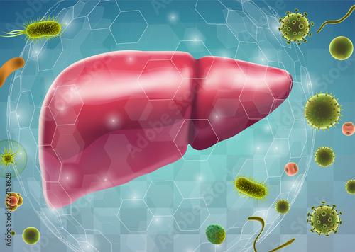 Obraz human liver. 3d vector. health and medicine. - fototapety do salonu