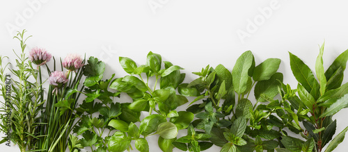 Stampa su Tela  Sprigs of healthy fresh culinary herbs in a banner