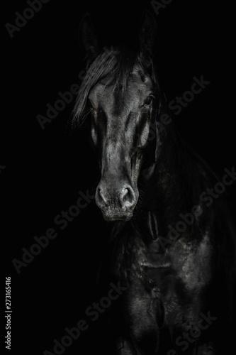 Fototapeta Portrait of a black horse on the black background obraz