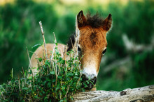 Brown Horse In The Forest, Scr...
