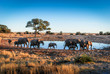 canvas print picture - Baby elephant at a waterhole, in Etosha National Park, Namibia, Africa