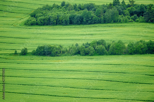 Green grass field areal view with stripes and bushes in farmland Canvas Print