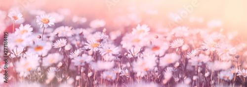 Poster Fleur Daisy flower, wild daisy flowers flowering in meadow, beautiful landscape