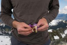 Climber Holding Picked Alpine Wildflowers.