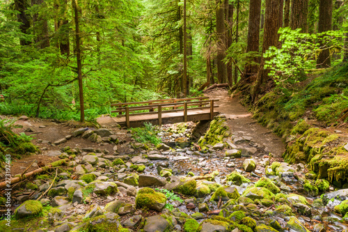 Canvas Prints Forest river Olympic National Park, Washington, USA