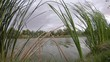 Tall green grass blowing in wind at edge of rippling lake, cloudy day