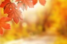 Autumn Background. Yellow Leaf...