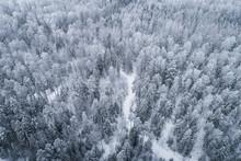 Snowy Forest Landscape In Estonian Winter.