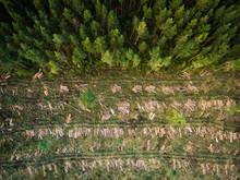 Aerial View Of Deforestation In Estonia.