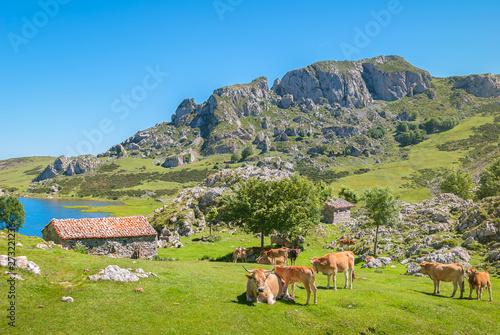 Garden Poster Pistachio Amazing landscape of Covadonga Lakes (Lagos de Covadonga) in Picos de Europa National Park, Asturias, Spain