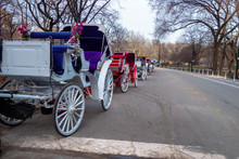 Horse And Carriage Recreational Rides In Central Park New York City