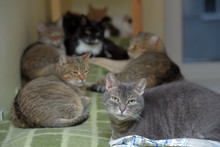 Cats Together Lies In An Anima...