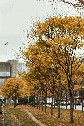 Colorful, golden Fall foliage in Old Montreal, Quebec, Canada