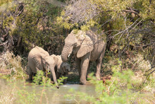 Elephants Cooling Off At A Water Hole.  Pilanesberg National Park In Pilanesberg, South Africa