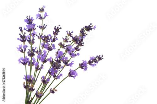 Spoed Fotobehang Lavendel Lavender flowers isolated on white