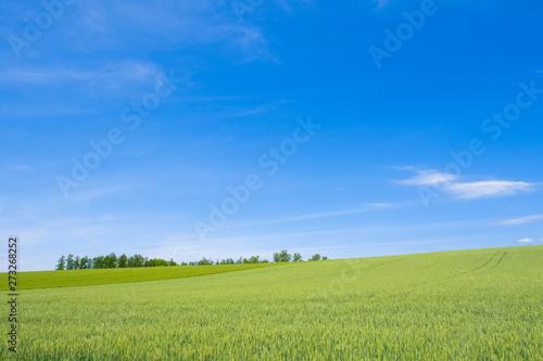 Foto op Plexiglas Platteland 日本の絶景 草原と青空テクスチャ