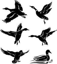 Wild Ducks Silhouette