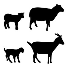 Vector Illustration Of Sheep A...