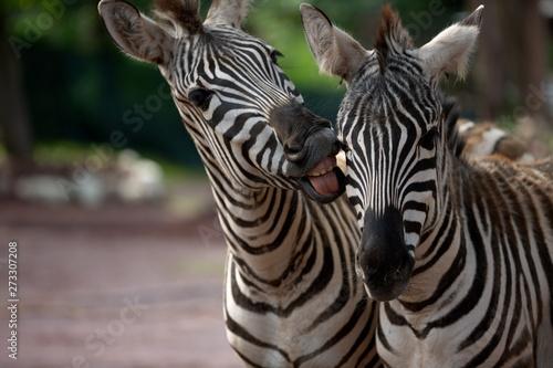 Hey .... du Zebra - 273307208