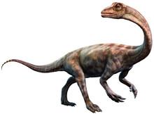 Anchisaurus From The Jurassic Era 3D Illustration
