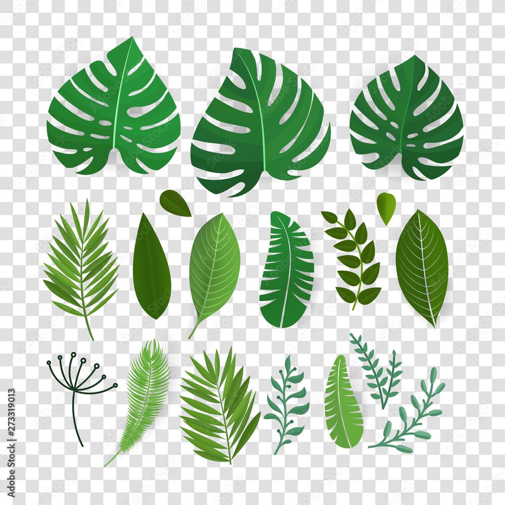 Fototapety, obrazy: Summer season exotic leaves vector collection isolated on transparent