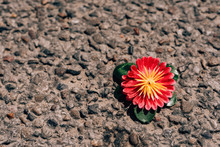Artificial Flower Lying On The...