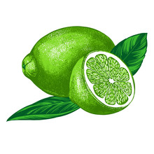 Fruit Lime With Leaves Isolated On White Background Color Vector Illustration