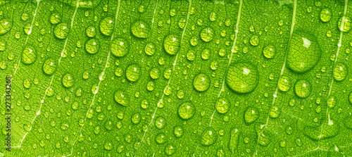 Fotografia Close up rain drops on green leaf, water and Panorama water and nature backgroun