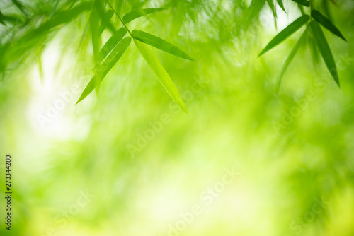Montage in der Fensternische Pistazie Closeup nature view of green leaf on blurred greenery background in garden with copy space for text using as summer background natural green plants landscape, ecology, fresh wallpaper concept.