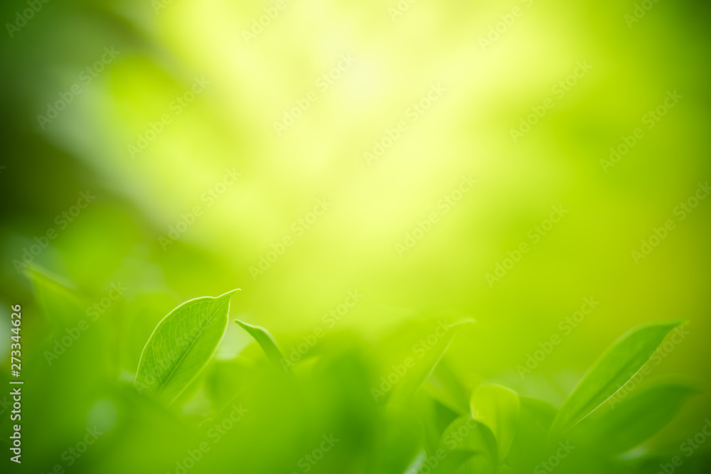 Fototapety, obrazy: Closeup nature view of green leaf on blurred greenery background in garden with copy space for text using as summer background natural green plants landscape, ecology, fresh wallpaper concept.