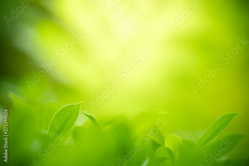 Fotomural  Closeup nature view of green leaf on blurred greenery background in garden with copy space for text using as summer background natural green plants landscape, ecology, fresh wallpaper concept