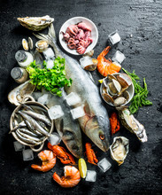 Fresh Seafood With Ice Cubes.