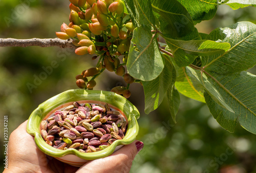 Sweet, delicate, fragrant nuts, Bronte pistachios with  brilliant green colour a Fototapet