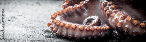 Fresh sea octopus. Fototapet