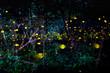 Leinwanddruck Bild - Light from insects, fireflies at night