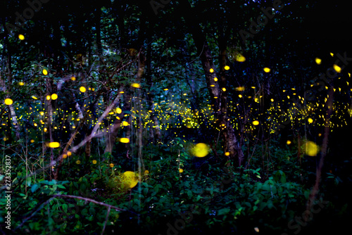 Light from insects, fireflies at night