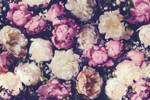 Vintage Bouquet Of Pink And White Peonies. Floristic Decoration. Floral Background. Baroque Old Fashiones Style Image. Natural Flowers Pattern Wallpaper Or Greeting Card