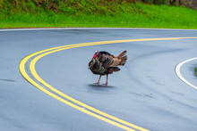 Turkey Crossing Tennessee Road With Copy Space