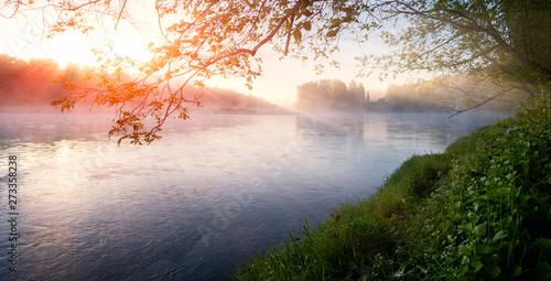 Aluminium Prints Forest river Foggy summer morning with birdsong, spring birds singing, nightingale, birdsong
