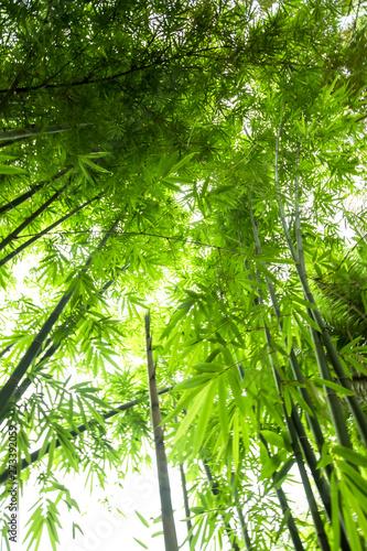 Fotobehang Bamboo Beautiful green huge bamboo growing in the jungle