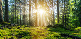 Fototapeta Sunset - Panorama of a beautiful forest at sunrise