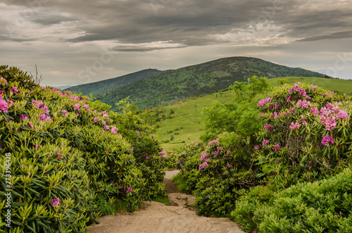 Photo Appalachian Trail Cuts Through Rhododendron Garden