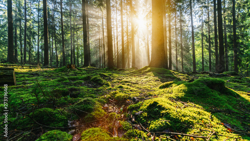 Cadres-photo bureau Miel Tranquil scenery in a green forest, with the sun casting enchanting rays of light through the trees
