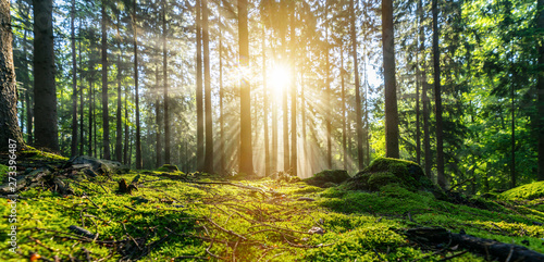 Spoed Foto op Canvas Natuur Panorama of a beautiful forest at sunrise