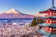 canvas print picture - 【山梨県】新倉山浅間公園から富士山と桜