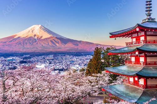 Obraz na plátně 【山梨県】新倉山浅間公園から富士山と桜