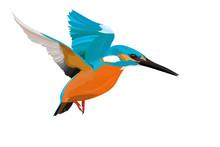 Cute Colorful Bird Kingfisher....